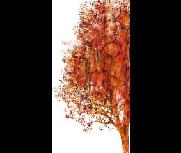Vetri stampati natura Laborvetro – Sintonia DB